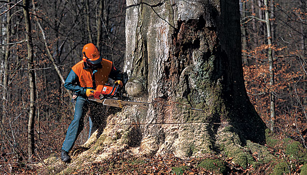Assembly Plant of the Year: STIHL Stays a Cut Above the