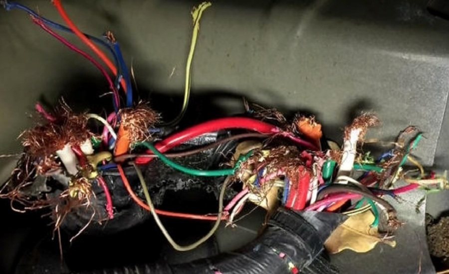 Rats News Pic to Use?1532739901 judge dismisses lawsuit against toyota for rodent damaged wiring